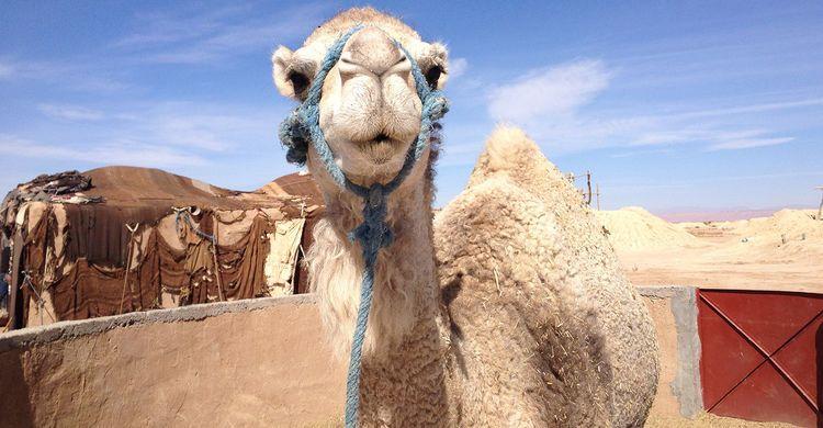 Marokkansk kultur dating