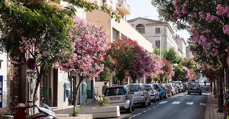 Billeje på Korsika