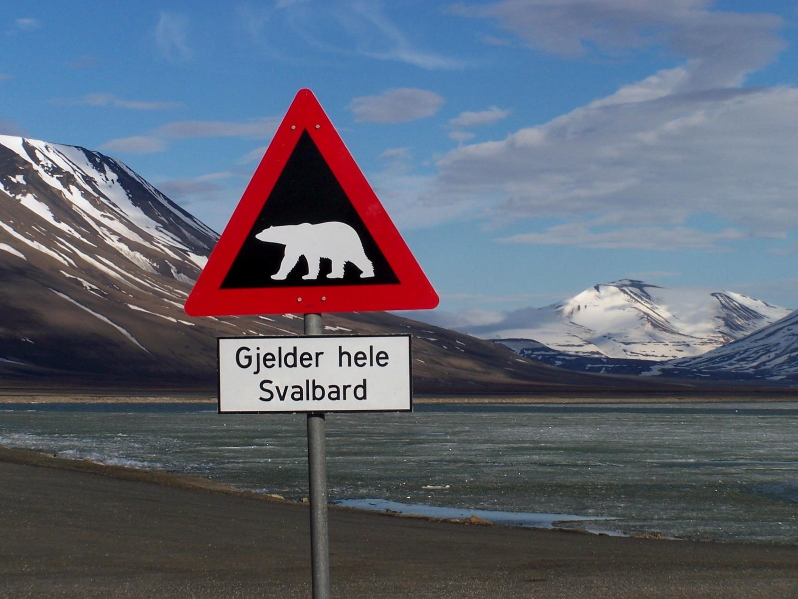 Isbjørne på Svalbard