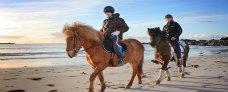 Lofoten til hest med Hurtigruten - Ruby Rejser