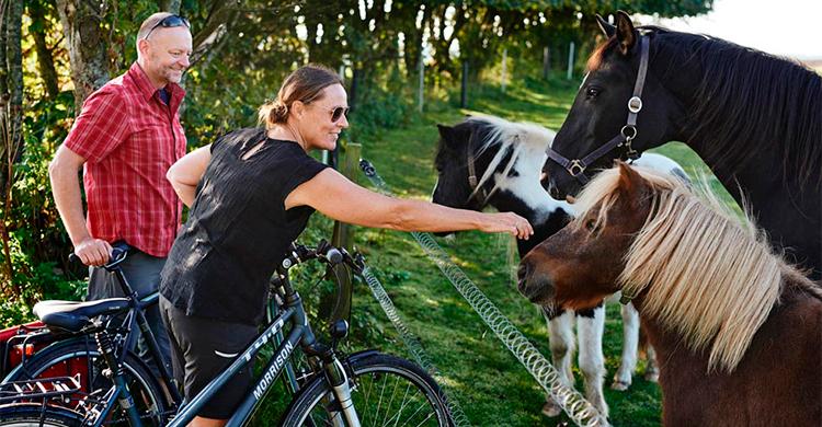 Heste på ruten
