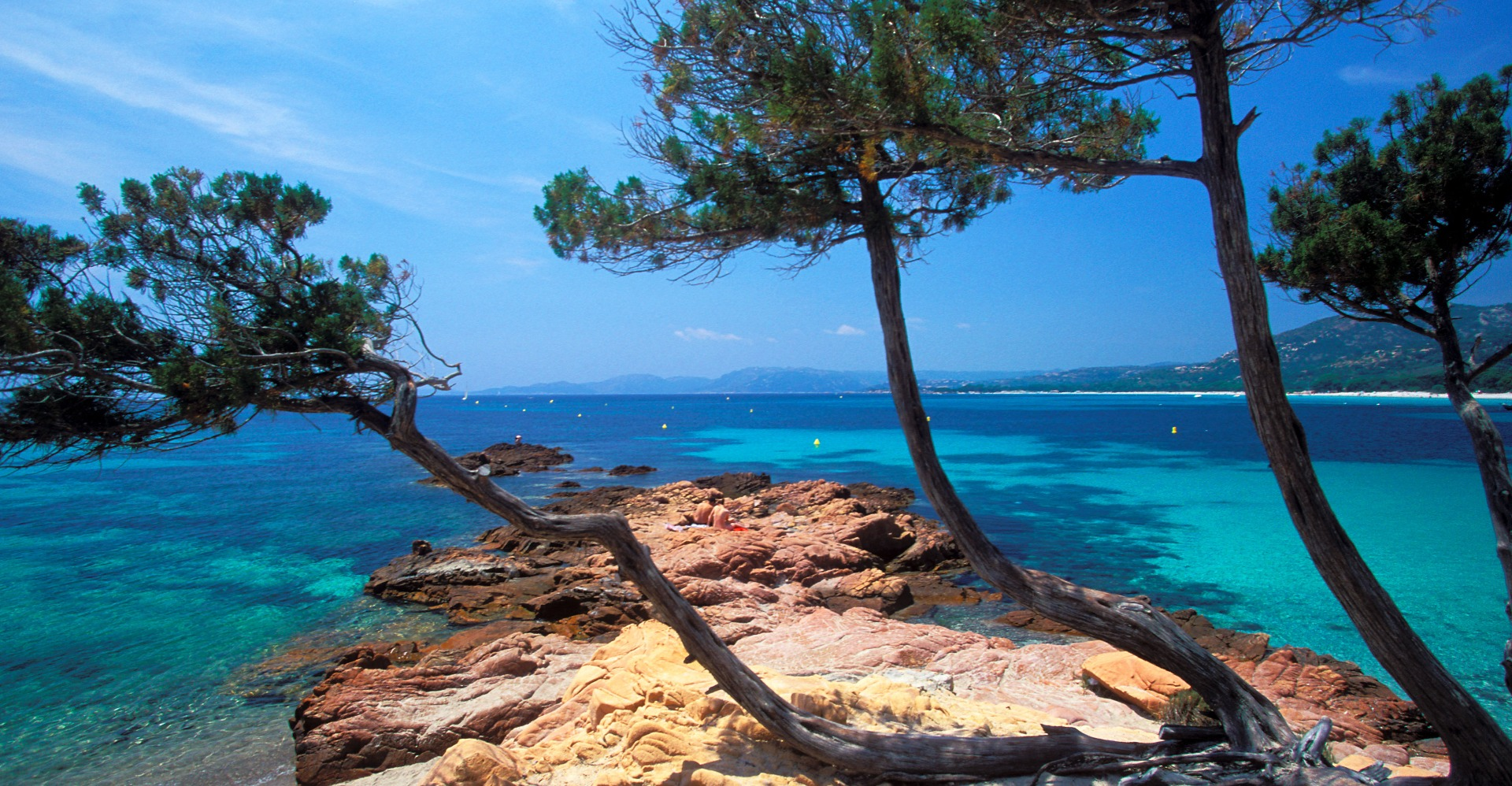Natur - Palmer og klipper på Korsika