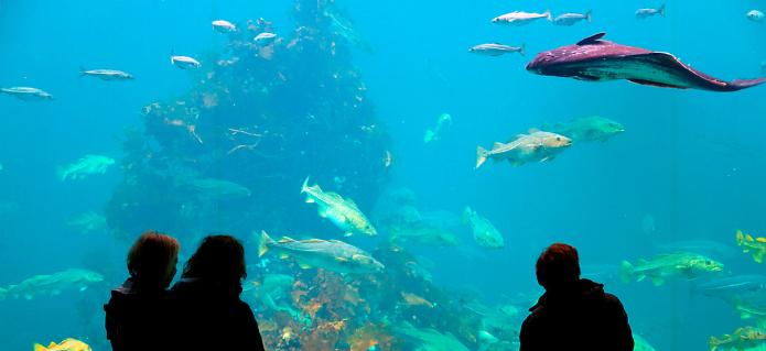 Atlanterhavsparken og Aksla i Ålesund - Hurtigruten - Ruby Rejser