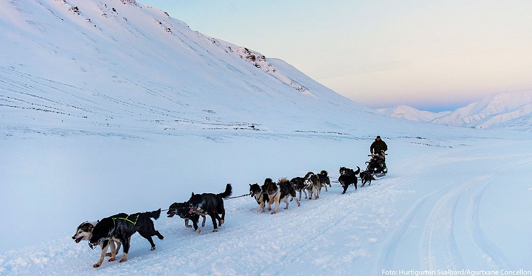 Hundeslæde på Svalbard