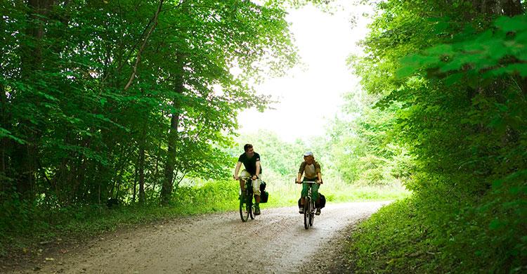 Cyklister i skov