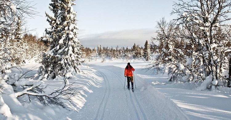 Langrendsløber i sporet ved Gålå
