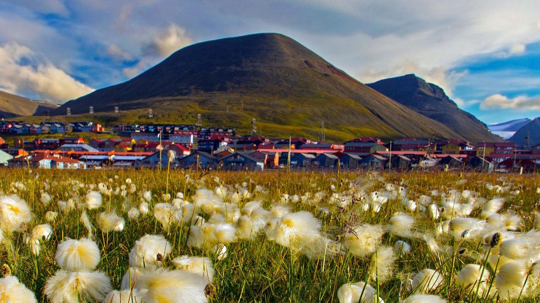 Svalbard sommer