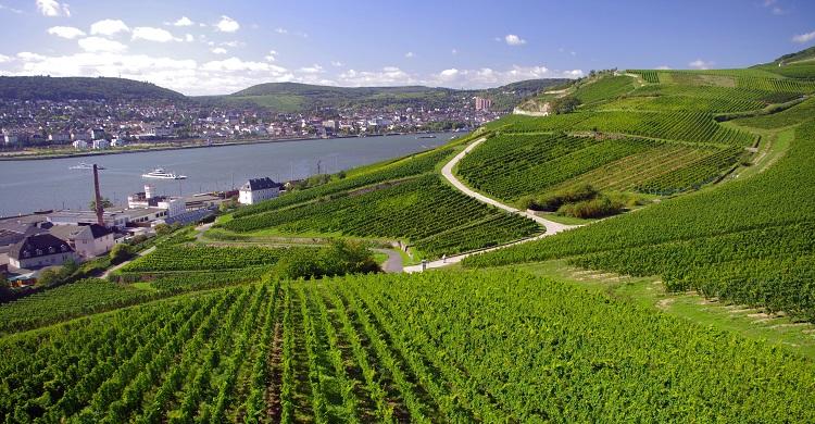Tyskland: Vinmarker ved Bingen og Rüdesheim
