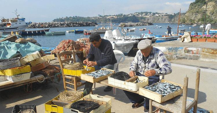 Fiskere på havnen