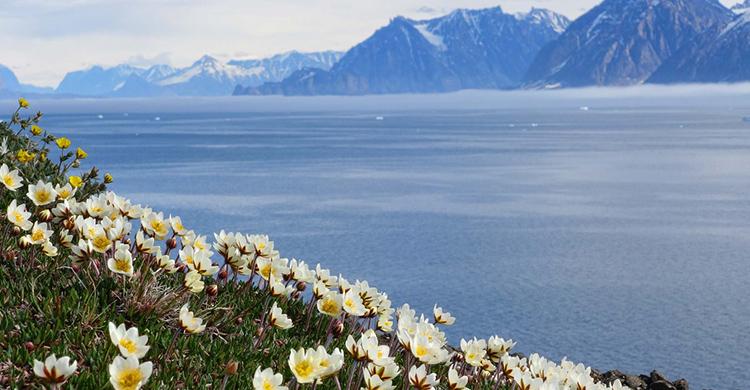 Ferier til Grønland
